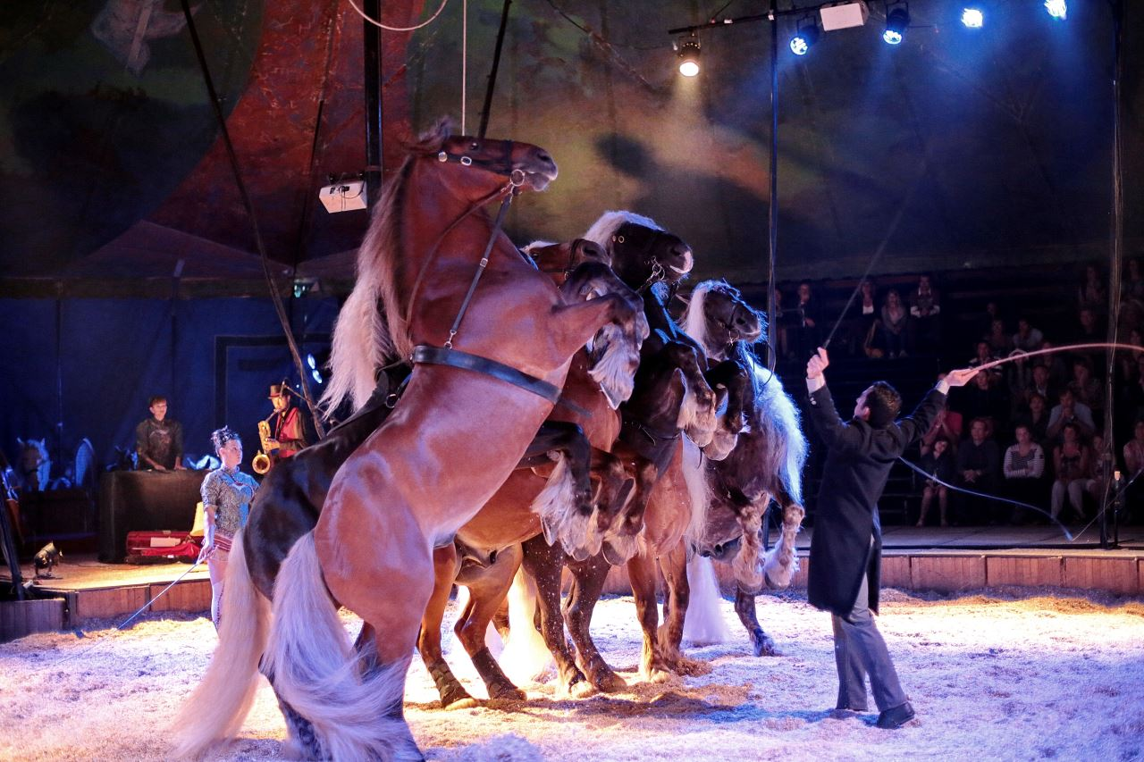 Photo d'un spectacle au Haras national d'Hennebont